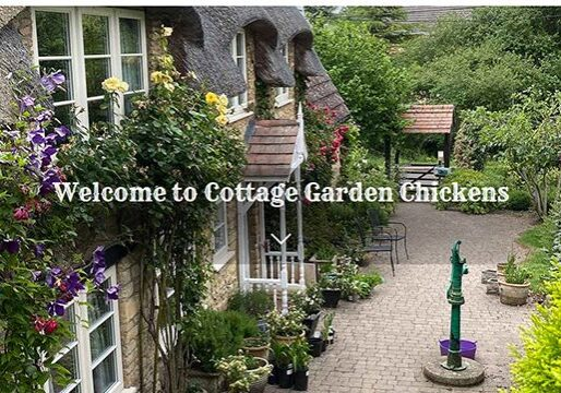 Cottage Garden Chickens